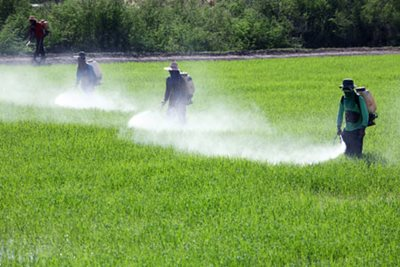 Workers applying restricted use pesticides or RUPs